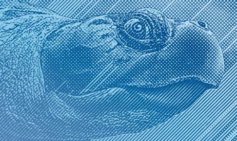 亀頭包皮炎症
